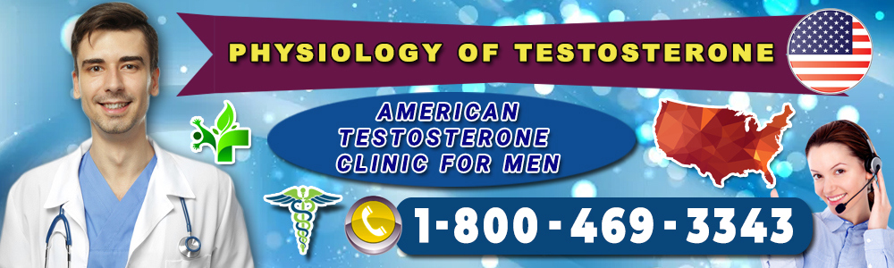 physiology of testosterone