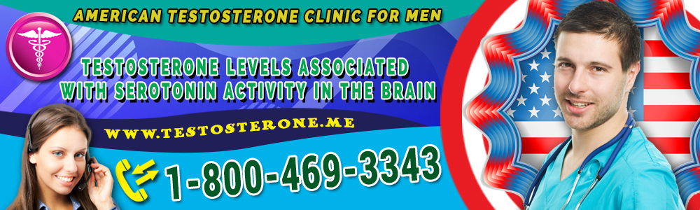 testosterone levels associated with serotonin activity in the brain