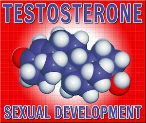 all about testosterone