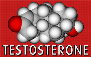 male hormone testosterone test