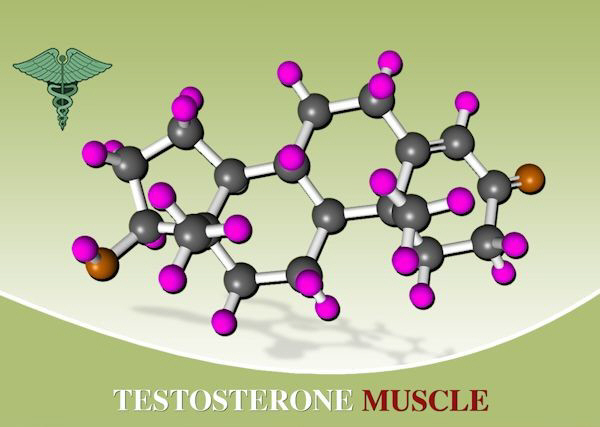 supplements to increase testosterone levels