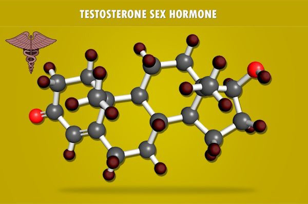 testosterone decline charts