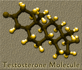 testosterone male hormone replacement