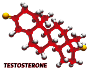 testosterone male hormone test