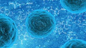 stem cell 163711_640 300x169