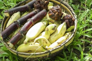 green banana food for elephant SBI 301081979 300x199